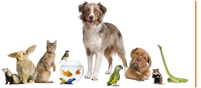 Taylor Veterinary Clinic logo